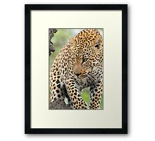 Just another gorgeous african leopard ! Framed Print