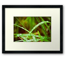 Dew Drops. Do Whop. Framed Print