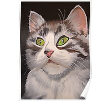 Long Haired Tabby Cat Portrait Poster