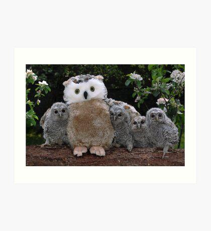Rescued Owlets get a stuffed toy Mum! Art Print
