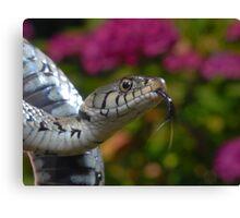 Grass Snake Canvas Print