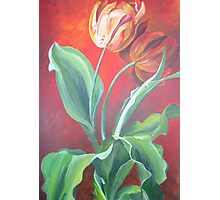Red and Yellow Tulips Photographic Print