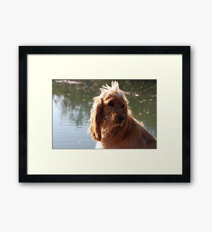 My Pup Jessie Framed Print
