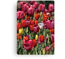 Colours of Tulip Canvas Print