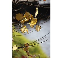 Falling Leaves 2 Photographic Print
