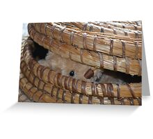 Peek a boo... there you are! Greeting Card