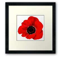 Poppy flower Framed Print