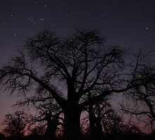 Botswana Boabab Trees by Miguel De Freitas