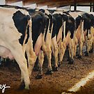 End of the Milk Line by milkayphoto