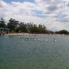 Pelicans at the Broardwater by MardiGCalero