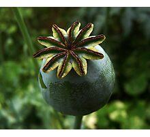 GREEN Photographic Print