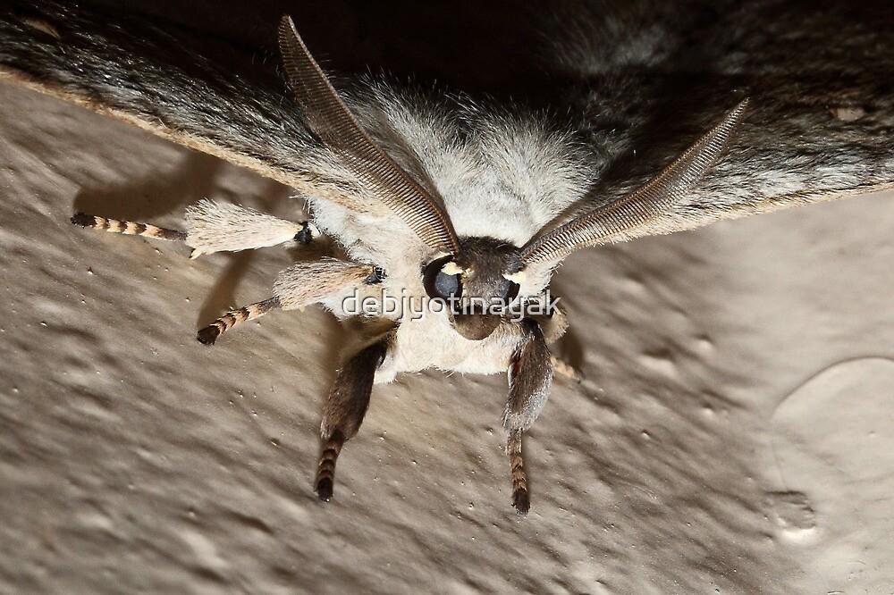 The Macro of a Moth. by debjyotinayak