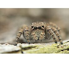 jumper Photographic Print