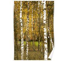 Urban Birches Poster
