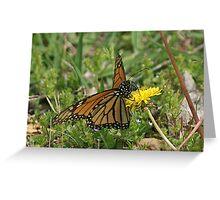 Monarch Dandelion Greeting Card