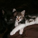 Hera And Iris our two new arrivals by brucemlong
