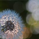 Dandelion: Early Morning by Chet  King