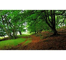 Walking in an ancient forest Photographic Print