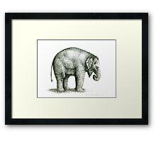 Baby Elephant g2011-008 by schukina Framed Print