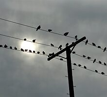 Birds on Wires by Christine Chase Cooper