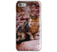 House Cat iPhone Case/Skin