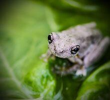 Frog by BoB Davis