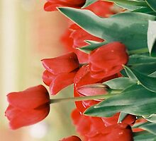 Red Tulips by Citisurfer