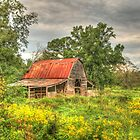 Old Mossy Creek Barn  by Chelei
