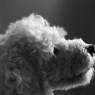 White Fluffy Dog by Jackson  McCarthy