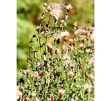 Naked Weeds Photographic Print