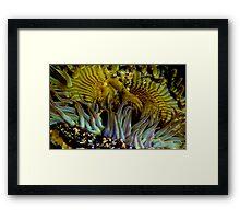 Santa Cruz Tidal Anemone Framed Print