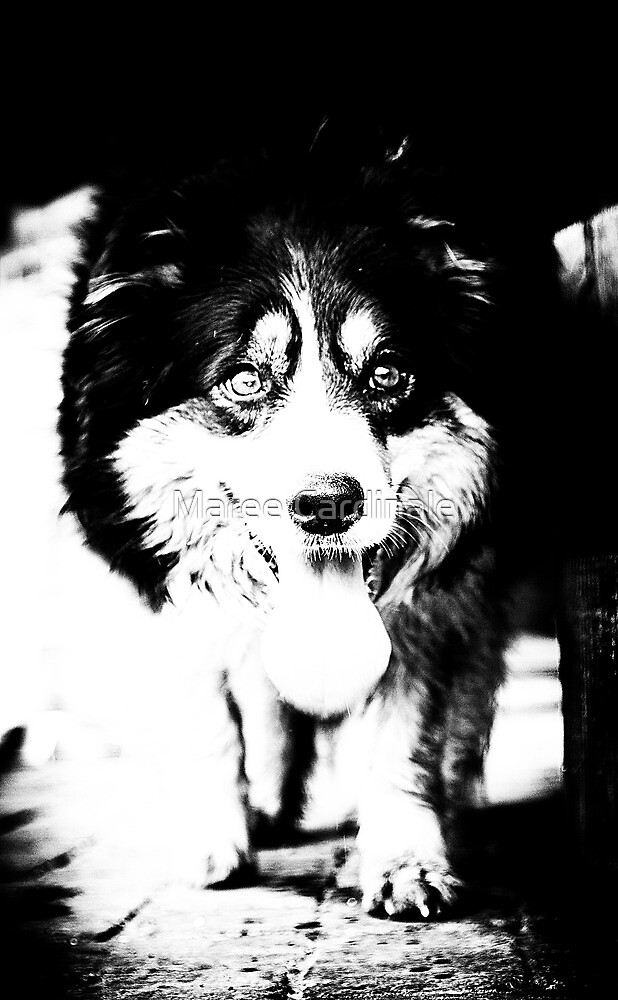 dog by Maree Cardinale