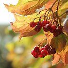 Viburnum | Guelder rose by Ranisha