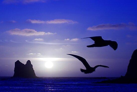 the double bird blues by dedmanshootn