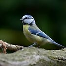 Blue tit by Peter Wiggerman