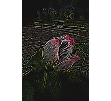Electric Lotus Photographic Print