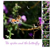 Spider captures butterfly Photographic Print