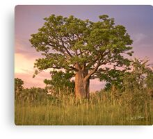 Boab Tree facing sunset. Canvas Print