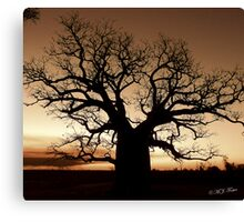 Boab Tree at sunset with a bushfire in the background. Canvas Print