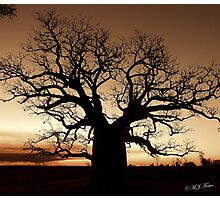 Boab Tree at sunset with a bushfire in the background. Photographic Print