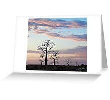 Boab trees at sunrise, Derby marshlands. Kimberley, Western Australia. Greeting Card