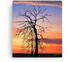 Blue Hour,Solitary Boab at sunset. Derby, West Kimberley, Western Australia. Canvas Print
