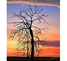 Blue Hour,Solitary Boab at sunset. Derby, West Kimberley, Western Australia. Photographic Print