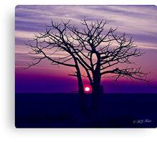 Boab Sunset. Derby. West Kimberley region of Western Australia. Canvas Print
