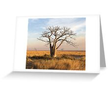 Boab Tree out on the marsh. Derby, West Kimberley region of Western Australia. Greeting Card