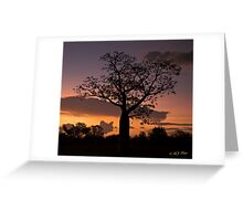 Boab Tree at sunset along the Derby Highway. West Kimberley Region of Western Australia. Greeting Card