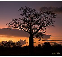 Boab Tree at sunset along the Derby Highway. West Kimberley Region of Western Australia. Photographic Print