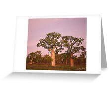 Boab Trees facing the setting sun. Derby, West Kimberley Region of Western Australia. Greeting Card