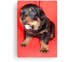 Rottweiler Puppy Howling For Attention Canvas Print