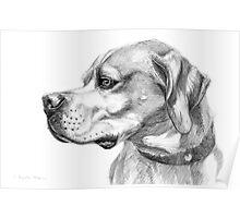 Pointer dog portrait g037 by schukina Poster